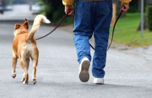 walking-the-dog.jpg
